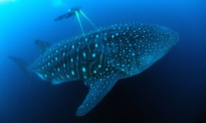 Footage of whale from Blue Planet