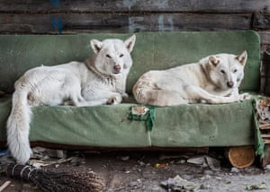Dogs outside a dog kennel