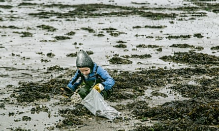 A child picking up oysters in Denmark