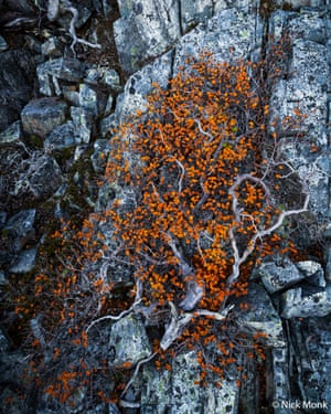 The runner-up in the botanical category, Gondwanan Link by Nick Monk. He says: 'A time-weathered Nothofagus gunnii bush hugs the alpine rocks of the Cradle Mountain-Lake St Clair national park, providing an ancient link of modern Tasmania to the super continent of Gondwana.'