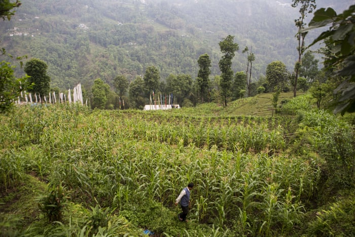 Sikkim's organic revolution at risk as local consumers fail