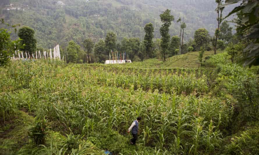 Organic farm India