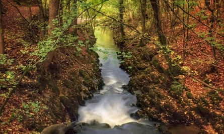 Flowing water of Eller Beck in Skipton Castle Woods in the autumn