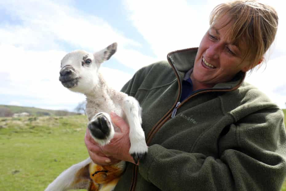 'We diversified to stay in business' ... Karen Scott and lamb on her Low Way farm in Teesdale