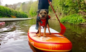 Doggy paddle: a pooch gets out on the water with Stand Up Paddle Board UK, one of the 100 businesses chosen to be promoted in the run-up to Small Business Saturday.