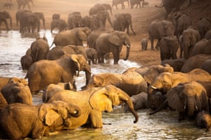 A rare sighting of the largest elephant herd in the world in Zakouma National park in Chad.