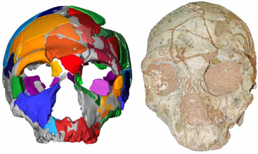 A computer model (left) and reconstruction (right) of one of two skulls found in a cave in Greece, the earliest modern human remains found outside Africa.