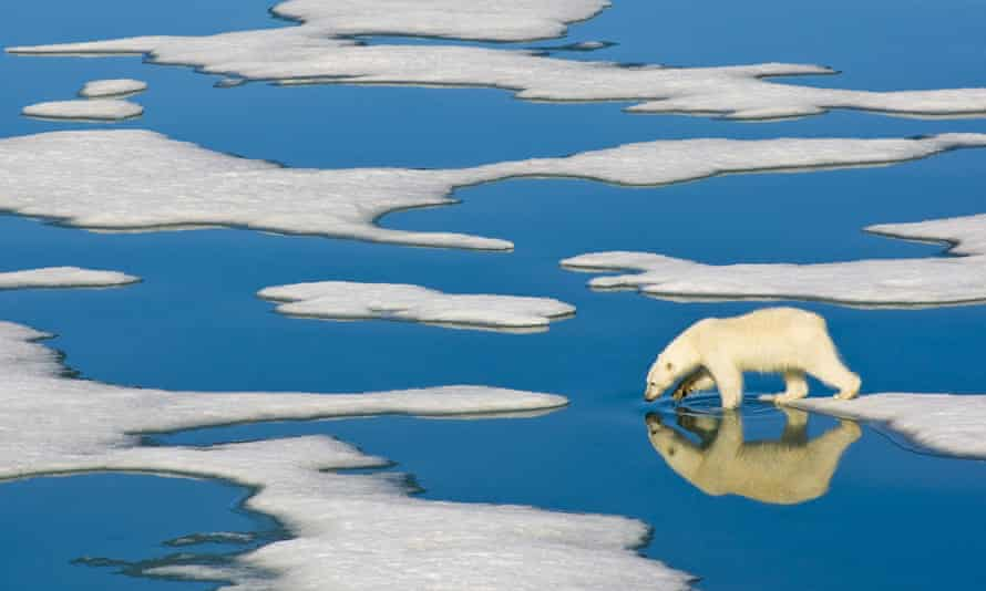 A polar bear walking on melting ice sheets.