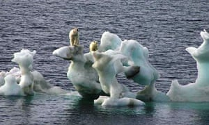 With greater melting of the sea ice, polar bears (above, off northern Alaska in 2007) find hunting for prey hard.