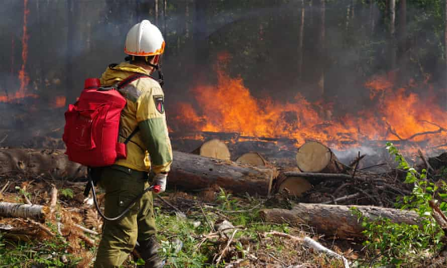 A worker helps battle a wildfire in the taiga forests of Siberia.