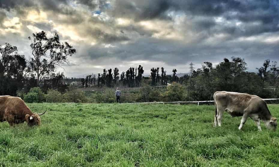 Apricot Lane Farms is a 213-acre biodynamic and organic farm in Moorpark, California. The farm nurtures 100 different types of vegetables, 75 varieties of stone fruit, Scottish highland cattle, pigs, chickens, sheep, ducks, hens, horses and livestock dogs.
