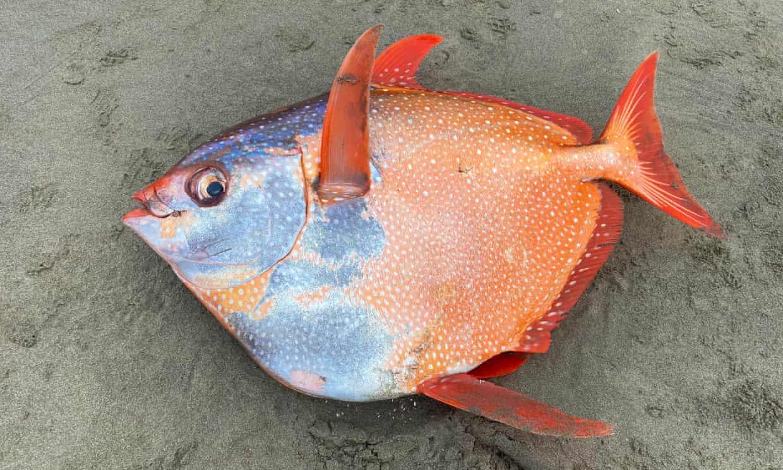One Fishy Thing: Elusive Animal Washes Ashore