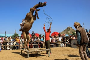"A camel is made to perform during a ""dance competition"" held during the Pushkar Camel Fair in Rajasthan. Thousands of livestock traders from the region attend the fair"