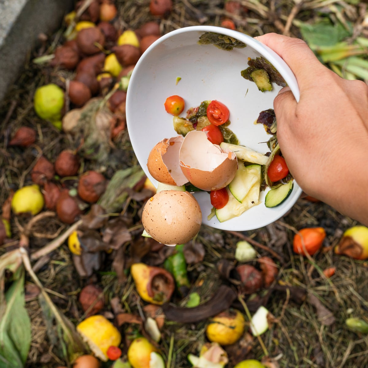 What's the best way to start composting? | Consumer affairs | The Guardian