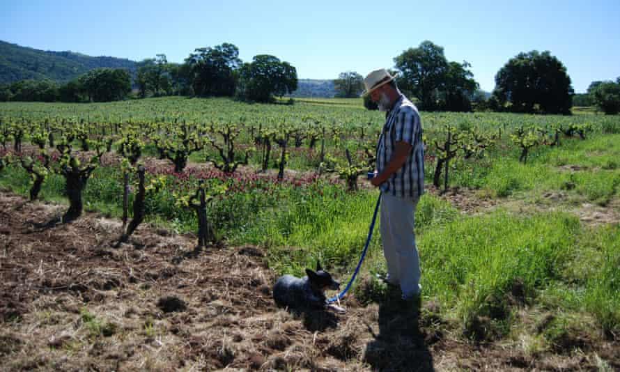 Will Bucklin at his dry-farmed vineyard Old Hill Ranch in Sonoma Valley.