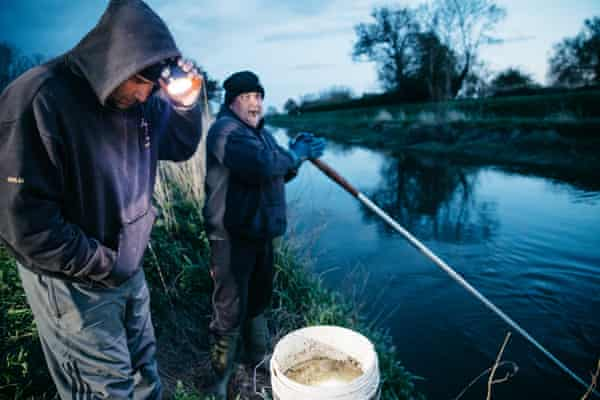 Fishing for eels to rewild