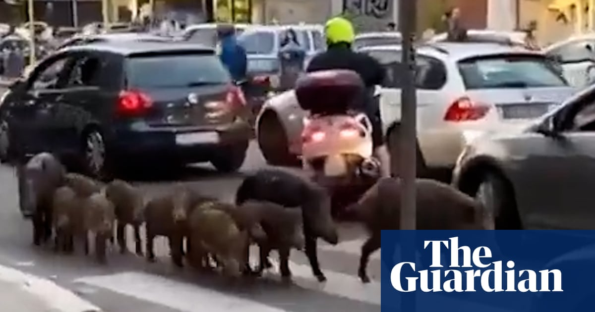 Wild boar on streets of Rome are being used against me, says mayor