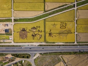 Depictions of local mascots, a fish and a ladybird in a rice field in Suncheon, South Korea