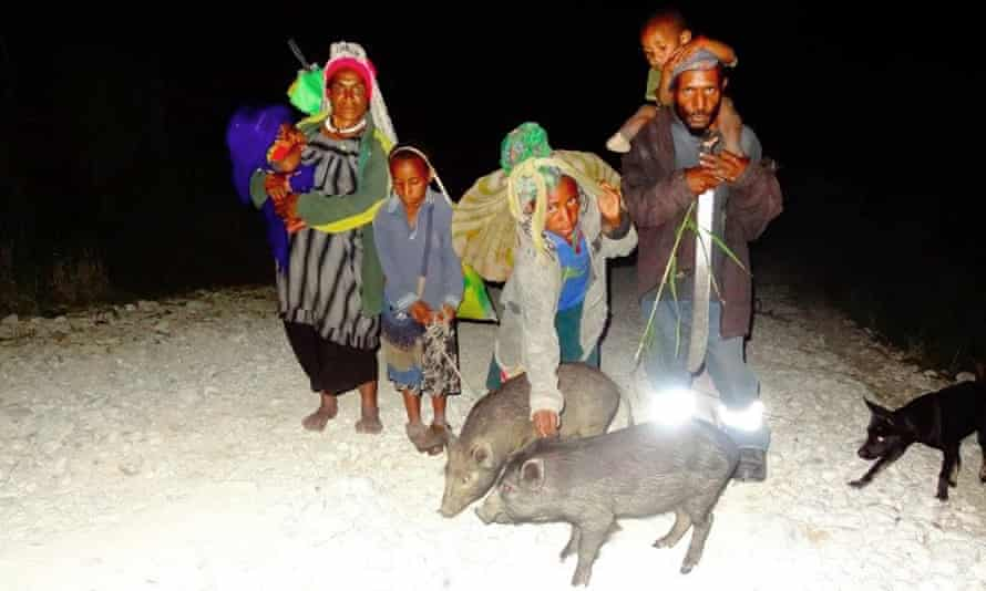 A family leaves their high altitude village of Kandep in Enga Province, Papua New Guinea. They are walking with their pigs and dog to stay with relatives in a lower altitude and less drought effected community.