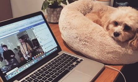 A dog watches a virtual choir practice over Facebook Live.