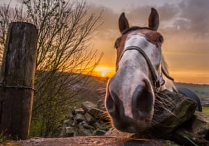 Yorkshire, UK Mike the horse captured on an autumn morning by local amateur photographer
