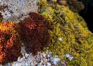 Rocks covered with lichen on Beldoo Moss