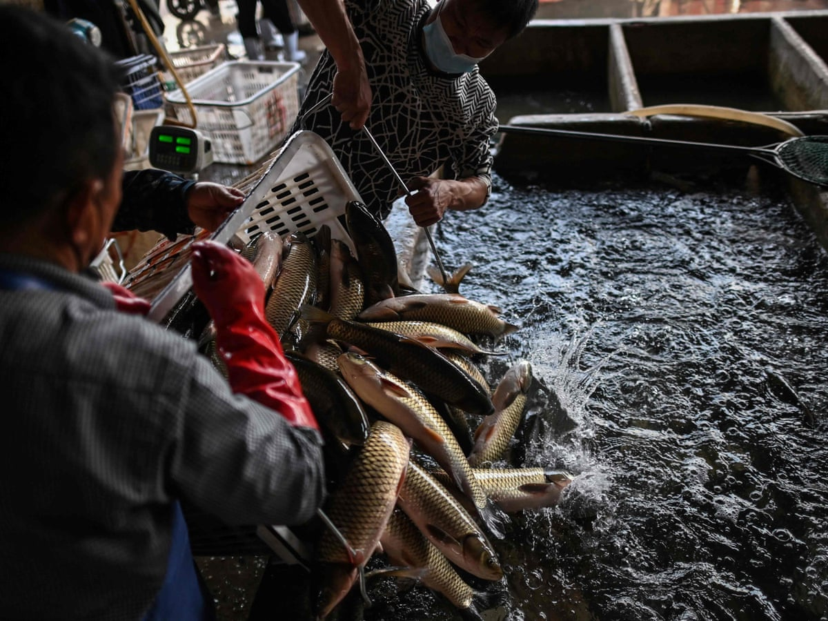 What is a wet market? | Global development | The Guardian
