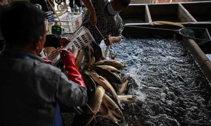 Workers unload fish at the Wuhan Baishazhou market in China's Hubei province. Wet markets have come under scrutiny in the wake of the coronavirus outbreak.