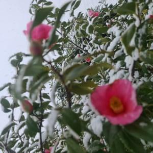 Flowers by Igor, eight