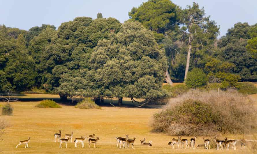 Deer in Veliki Brijun safari park.