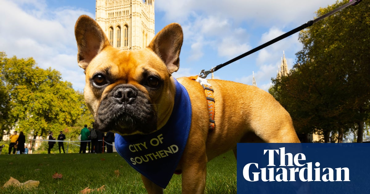 Westminster dog of year title goes to David Amess's French bulldog