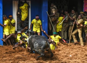 Participants in a bull-wrestling event are knocked to the floor in India