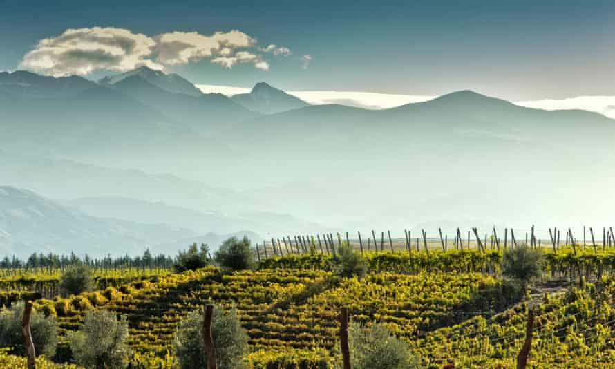More than just malbec: a vineyard at foot of the Andes in Mendoza, Argentina.