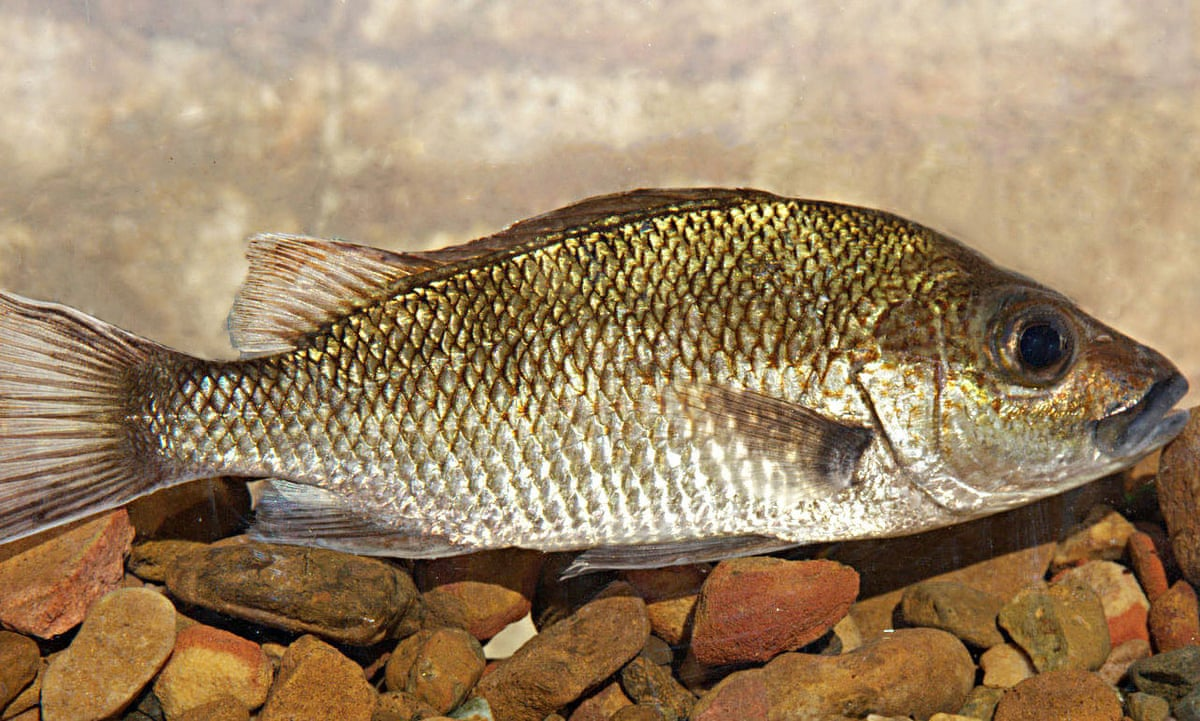 A fish called tim winton scientists name new species for Colorado fish species