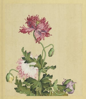 Opium poppies (Papaver somniferum), 18th-century album leaf, ink and colours on silk, National Palace Museum, Taipei