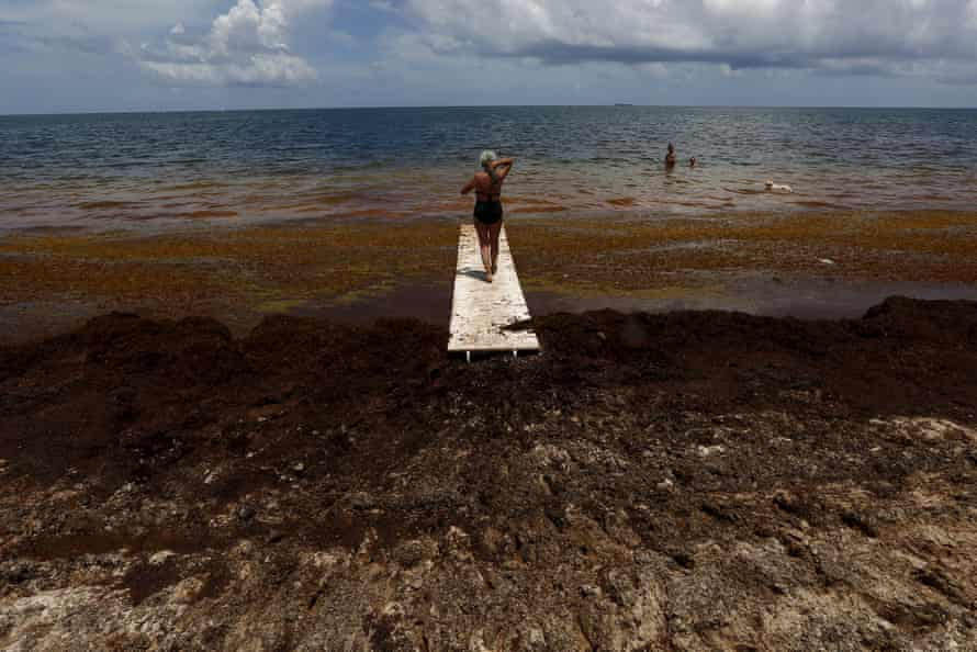 A woman walks on a makeshift bridge near sargassum algae in Puerto Morelos, near Cancun, Mexico.
