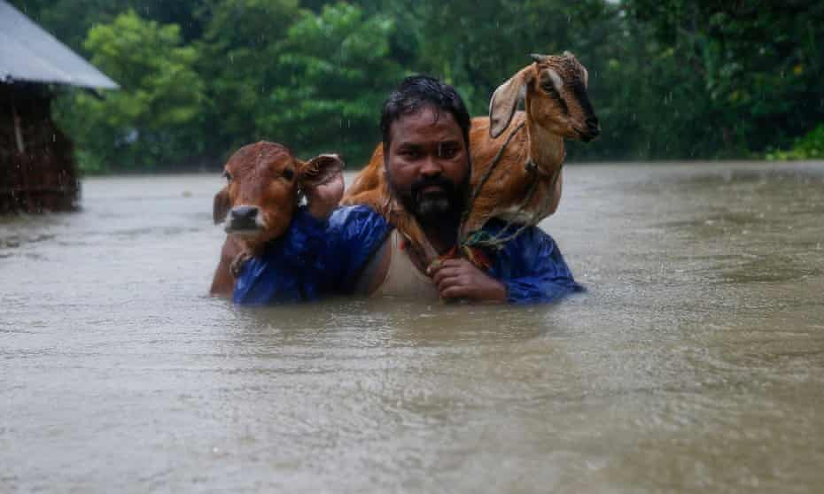 A man carries a cow and a goat as he moves to safer ground in Nepal's Saptari district.