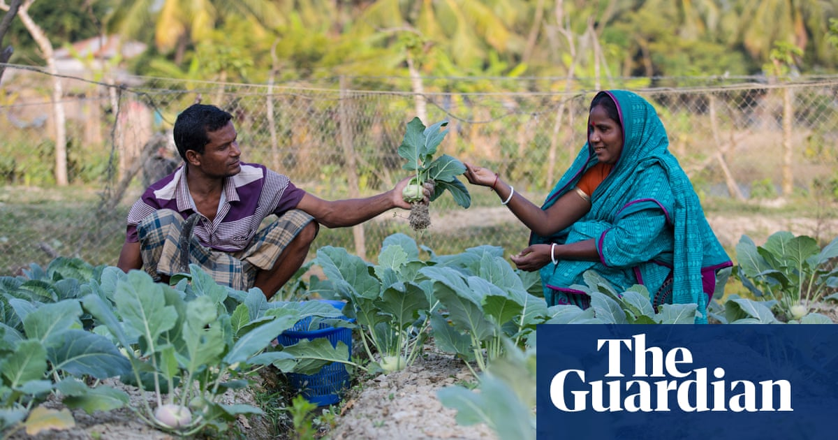 Salt-tolerant crops 'revolutionise' life for struggling Bangladeshi farmers