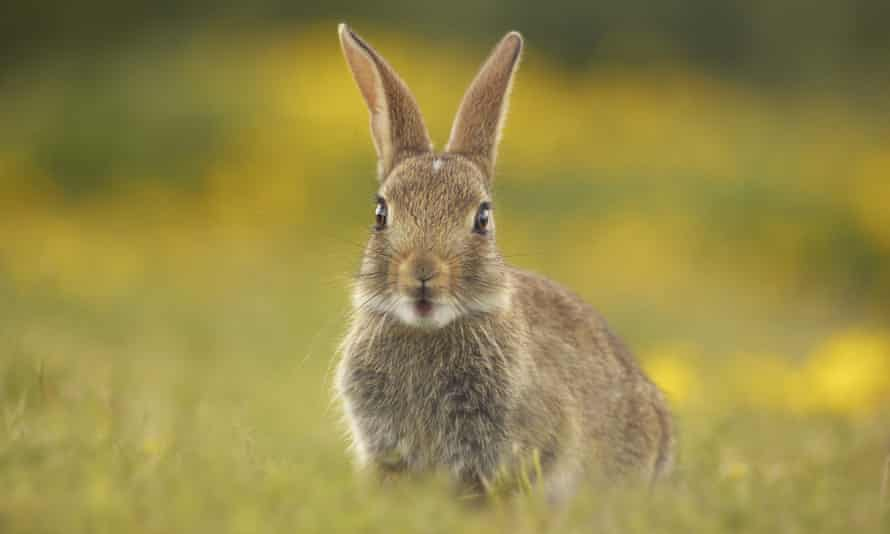 young rabbit in grass