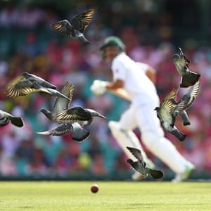 Pigeons flying in the Australia v Pakistan match