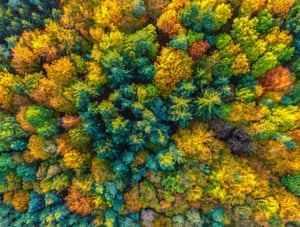 An aerial picture with a drone shows fall foliage among pine trees near Sieversdorf, Germany