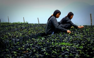 A nursery facility where young plants acclimatise to higher elevations before being distributed. The land they are grown on is leased from the local monastery.
