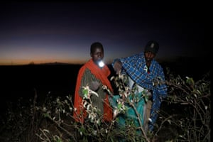 Joseph Mejia, a farmer in Laikipia county, Kenya, holds a torch in his mouth while harvesting desert locusts