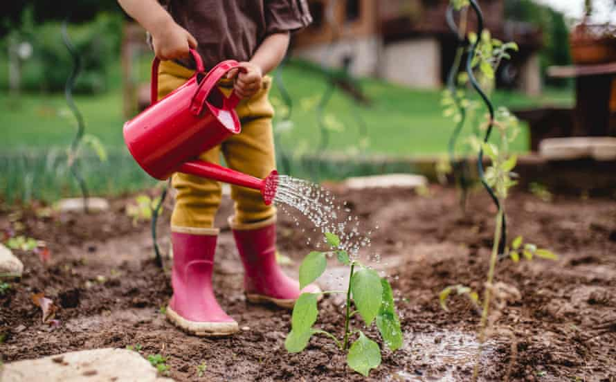 A child in the garden, watering plants with watering can