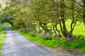 Trees alongside the road that runs down to the Kingswood Burn.