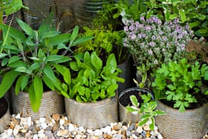 A selection of different herbs grown in tin cans