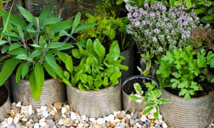 Live plants are more sustainable than cut herbs you might have to bin.