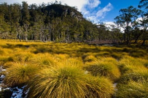 The Cradle Mt Lake St Clair National Park - button grasses and native bush and woodland show an example of the environment before the devasation