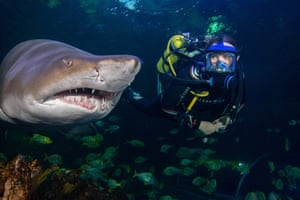 Winner, Behind the Scenes category: Hold your gaze, by Donovan Lewis at Blue Planet Aquarium. Species: Sand tiger shark