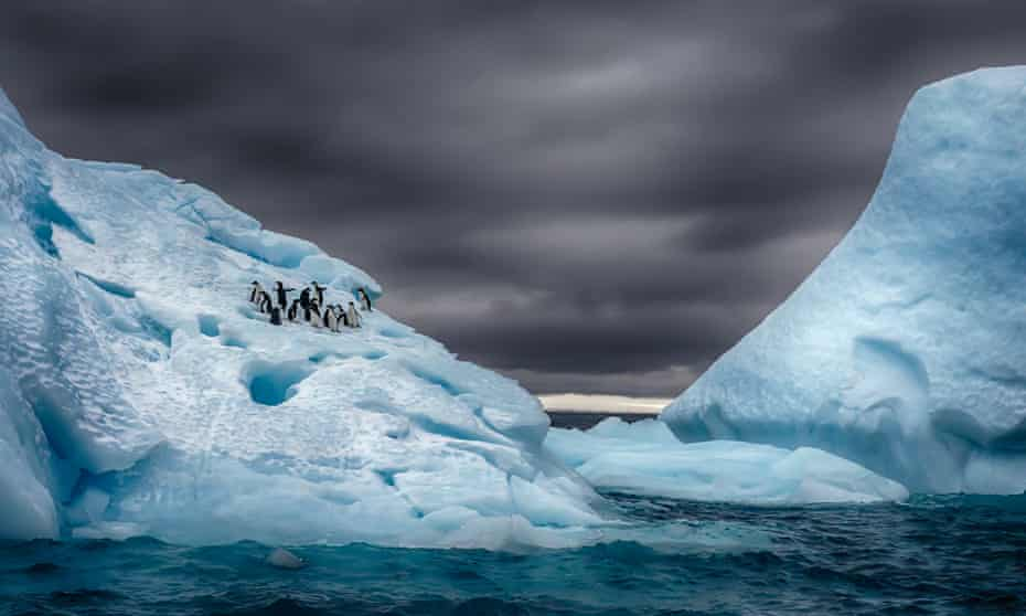 Adelie penguins in Antarctica, close to Fortin Sargento Cabral. From Michael Poliza's new book, The World.